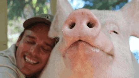 23岁帅气小伙不顾家人反对, 疯狂爱上一头母猪, 并坚持跟母猪结婚