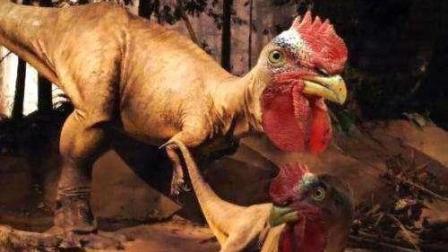 鸡的祖先到底是谁? 看完你还敢吃鸡吗?