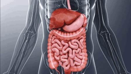 人体有哪些器官, 可以直接拿掉, 同时不影响生存? 看完大开眼界
