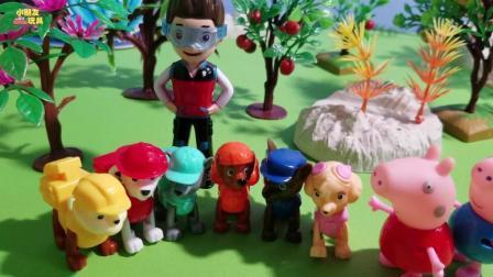 小猪佩奇玩具故事: 汪汪队的狗狗们帮佩奇捡掉树上的皮球