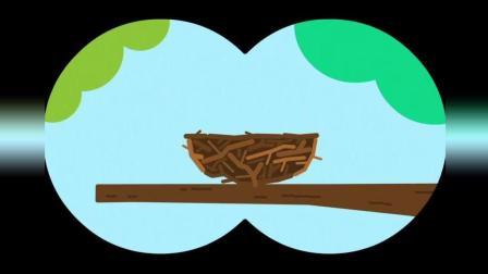 《嗨道奇第一季》这是小鸟的家, 一个鸟巢, 一个美丽的鸟巢