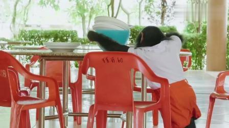 """《神奇伙伴在哪里》没见过如此""""贤惠""""的猩猩, 竟自己洗盘子!"""