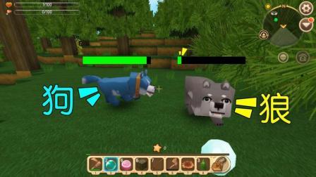迷你世界: 狗和狼谁更厉害? 我见证了这场决斗, 最后狼被狗咬死了