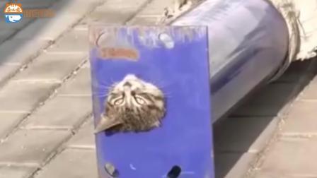 一只生无可恋的猫咪, 钻进铁管里出不来, 急坏众人!