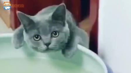 猫咪喝鱼缸里的水, 男主说那水脏, 猫咪说你喝多了喝的更多!