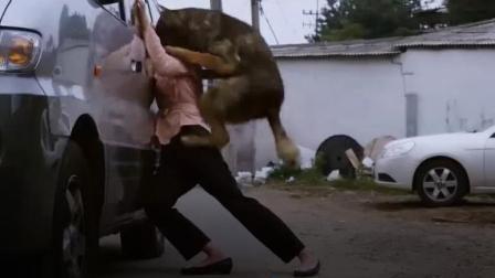 烈犬多次伤人, 而且目标准确, 背后故事让人很心酸!