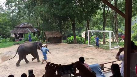 泰国游: 大象罚点球, 如果大象成立足球队国足的排名又要降低了。。。。