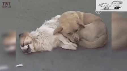 记录仪下的那些瞬间, 狗狗和它们逝去的朋友, 网友;看着都心疼