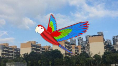 小鹦鹉扑翼机