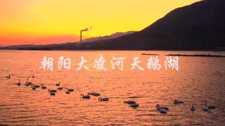 朝阳大凌河天鹅湖