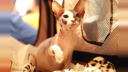 这几年拍的猫, 最萌的回忆