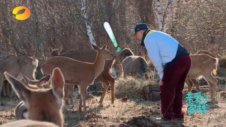 """腾格尔学鹿叫又""""咩""""又""""嗯"""", 把鹿都给吓跑了, 可爱无敌!"""