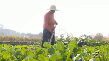 湖北孝感 八旬婆婆靠种菜为生 省吃俭用捐万元资助贫困生