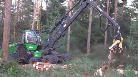 国外树木种植, 砍伐运输及加工一条龙! 不得不承认老外的技术太强大了