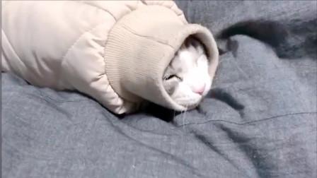 起床后找不到猫咪, 最后在袖子里发现了它, 哈哈太可爱