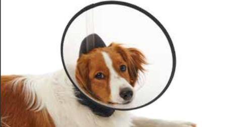BUSTER Premium Dog Collar-字幕-丹麦古氏诊断治疗系列-巴斯图高端犬用防护颈圈的使用