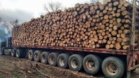 世界危险最大的伐木车, 需要多年驾驶经验的老司机才能驾驭