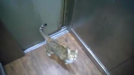乘电梯时遇到一只猫咪, 看样子是老手了, 丝毫不慌啊!