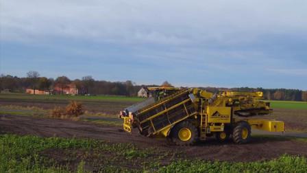 大型农场运输土豆过程, 全程机械化装车, 太方便了
