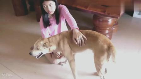 狗狗趴在主人身上的一脸享受的样子, 非常有爱的一幕