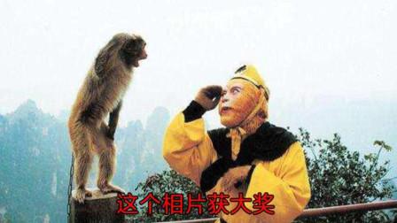 六小龄童和一只野生猴子的感人故事