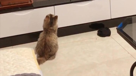 第一次见猫咪这么认真地盯着电视看猫和老鼠, 是要学习它帅气的抽烟吗?