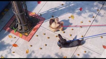 小狗狗为了自己的爱情, 勇敢踏上寻夫的道路, 好厉害