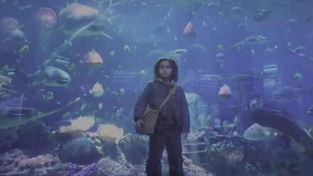 海王小时候就是王者, 在海洋馆受到同学的欺负, 众海兽都想护主
