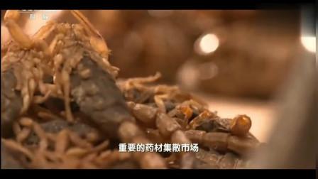 舌尖上的中国第三季-山上的美味蝎子! 醉蝎!