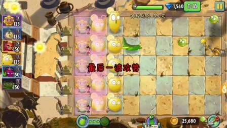 植物大战僵尸2高清版神秘埃及04: 强酸柠檬性价比很高