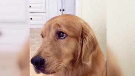 怎么能让生病的狗子吃药? 看到答案的我表示做不到