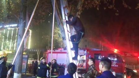 湖北襄阳 好心救流浪猫被困树上 消防员架天梯将其救下