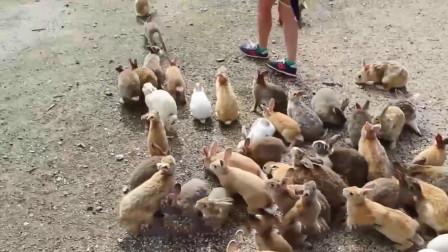 澳大利亚兔子泛滥成灾, 重奖灭兔能手, 网友: 差个中国厨师
