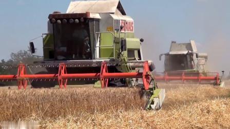 上千亩地的麦子收割怎么办, 只需几辆联合收割机, 一天就割完了