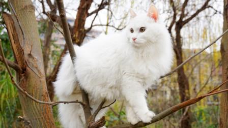 男子爬15米高树救猫 人上去了猫却溜走了!