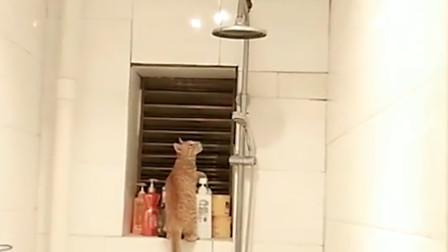 第一次见这么认真抓老鼠的猫咪, 这下看你往哪里逃!