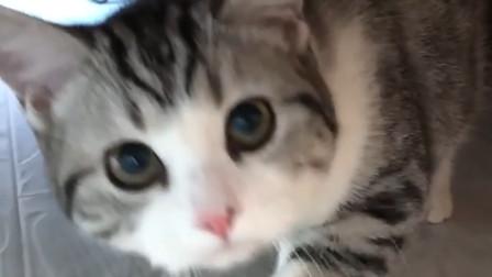 为什么别人家的小猫咪, 都这么可爱!