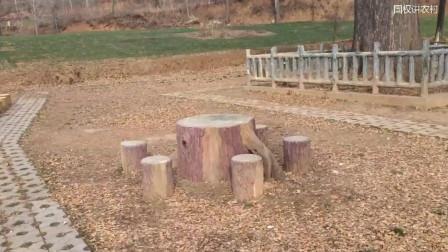1200年千年古树, 需要守护