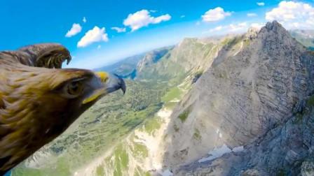 雄鹰翱翔在太行山之巅