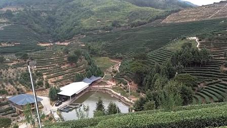 我的家乡---茶山
