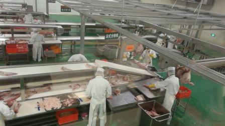 实拍先进的生产线,几分钟分割一只小肥羊!