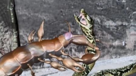 杨戬的玄功果然厉害,摇身一变化成飞天蜈蚣,立马逼将军现出真身
