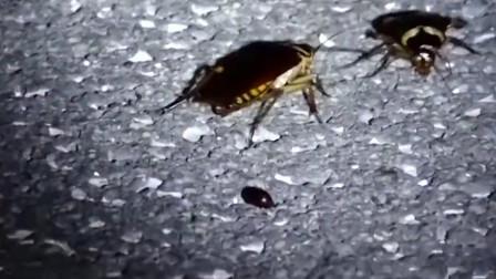 中国建世界最大蟑螂工厂,养10亿只蟑螂,每天消灭50吨垃圾