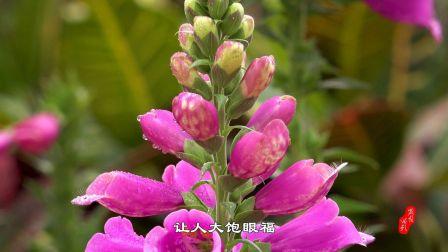 影像记录•猪年春节-云台花园郁金香花展