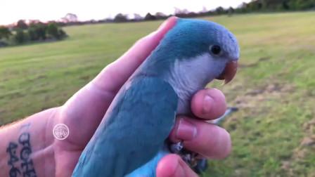 带着金刚鹦鹉跟蓝和尚去郊外野餐乐趣满满