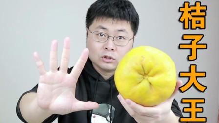 手掌那么大的桔子你吃过没,试吃福建发财柑橘