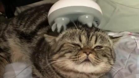 给猫咪买了个新玩具后,猫咪爽的已经不能自已了
