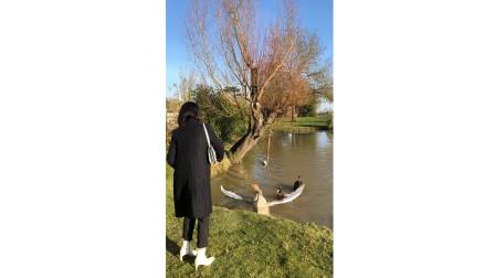 在法国,第一次遇到这样的鹅