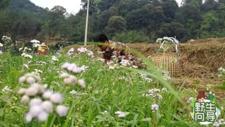 春暖花开:广西农村小伙割草喂鱼,在鱼塘边上意外收获季节性野味