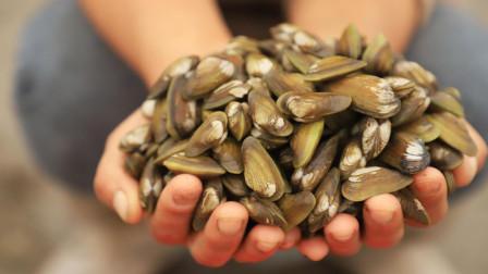 """小渔夫妇去海边挖""""海瓜子"""",别看这东西个头不大,个个饱满肉肥"""